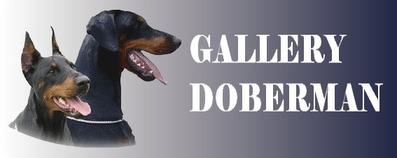 Database doberman